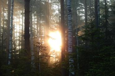 Cahaya Pagi